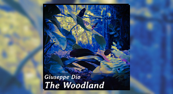 New single The Woodland. New Album in September.